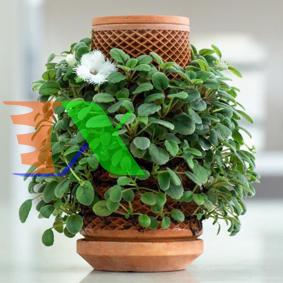 Picture of Chậu gốm trồng thủy canh tự thẩm thấu TG-01 Terraplanter, Chậu gốm trồng cây cảnh để bàn