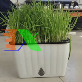 Picture of Khay trồng rau 2 lớp tự tưới KR-45, Chậu trồng rau thông minh có đáy chứa nước