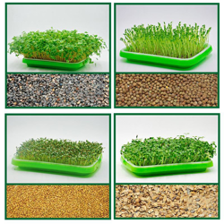Picture for category Tray, pots for growing bean sprouts