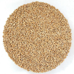 Picture for category The seed sprouts