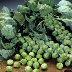 Picture for category Seeds of leaf vegetables
