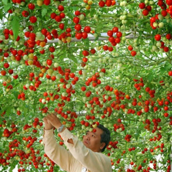 Picture for category Seeds of fruits