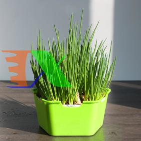 Picture of Khay trồng Rau mầm Thủy canh Ngũ Giác MAM-120, Chậu trồng rau 3 lớp có nắp đậy